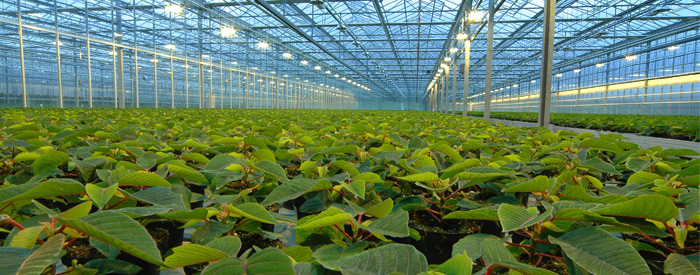 Horticulture – Food and Farming