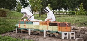 Honeybee Hives at Durham College