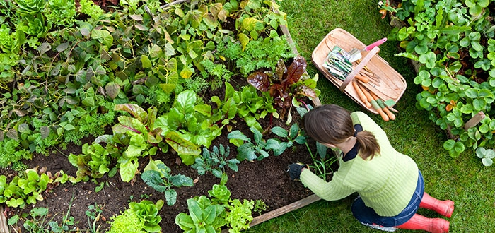 DC's food and horticulture programs